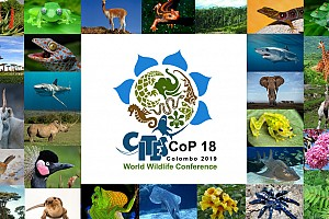 Summary report on CITES COP 18, Geneva (Switzerland)